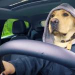 Opel Betaal met Views hond in de auto