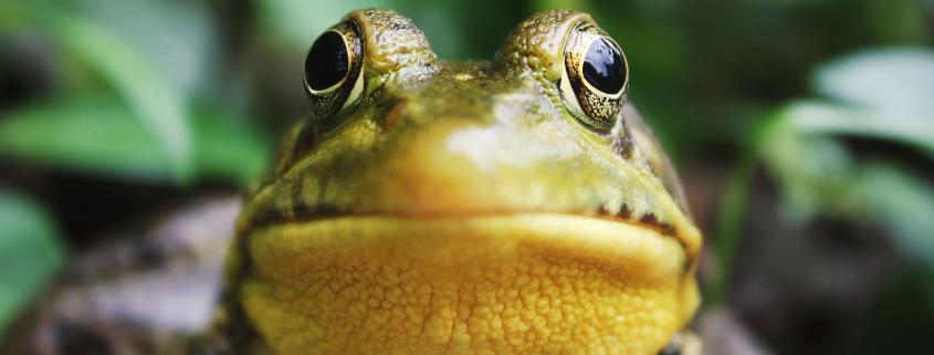 Waarom ik zo fan ben van Screaming Frog